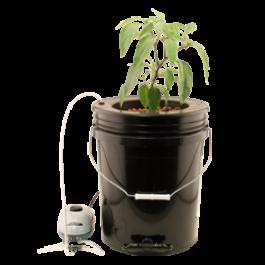 Flo N Gro - Gro Momma Bubbler Bucket